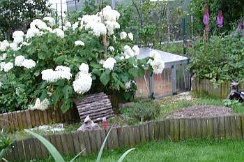 ameisenbek mpfung im landschildkr ten schutzhaus im freigehege. Black Bedroom Furniture Sets. Home Design Ideas
